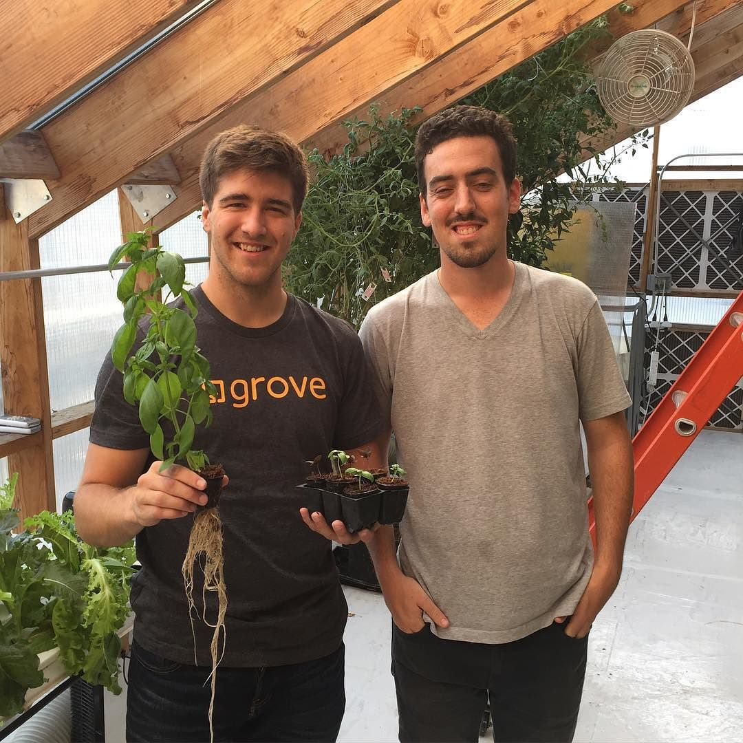 Grove Visits Brooklyn 4: Picked up some nice looking #basil from the ...