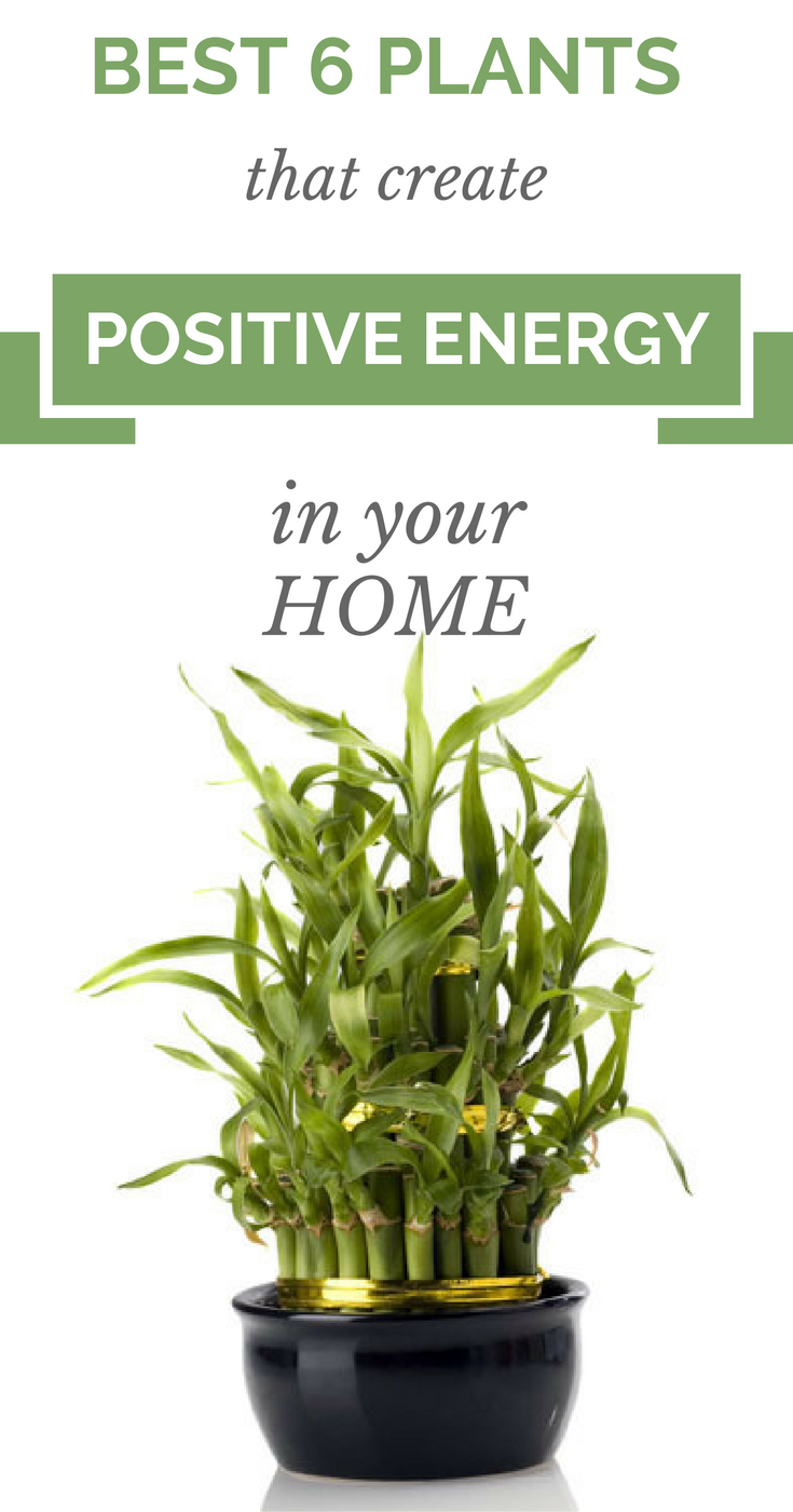 6 Plants That Create Positive Energy In Your Home According to many scientists there are a lot of plants which will provide positive energy, and in thAccording to many scientists there are a lot of plants which will provide positive energy, and in th