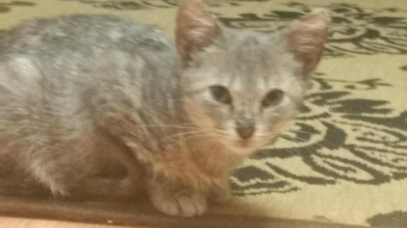 Adopt James on Cats, Raising kittens, Beautiful cats