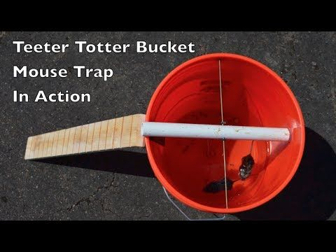 Teeter Totter Bucket Mouse Trap In Action With Motion Cameras