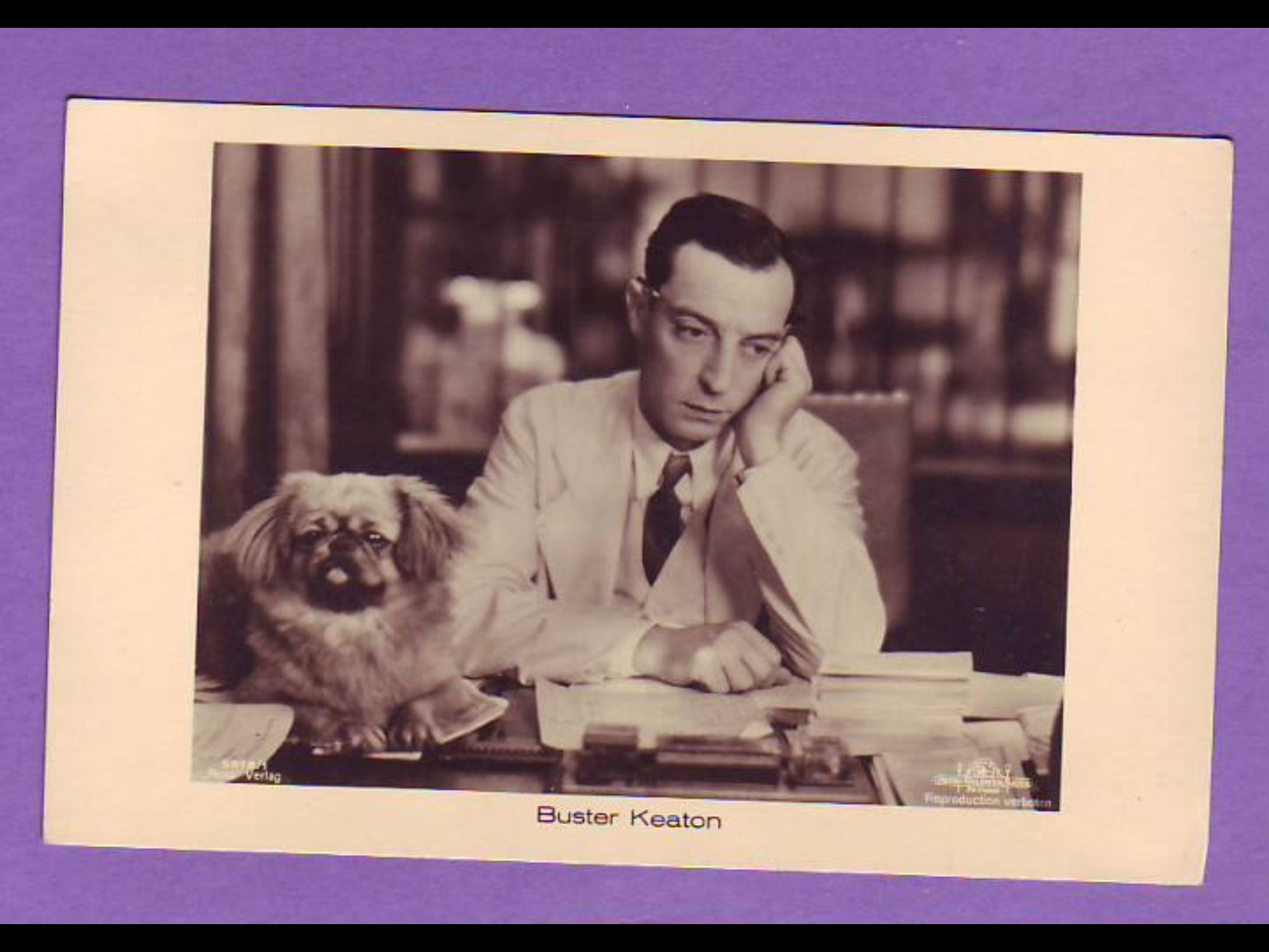 Buster Keaton Pekingese Pekingese Dogs Pekingese Puppies
