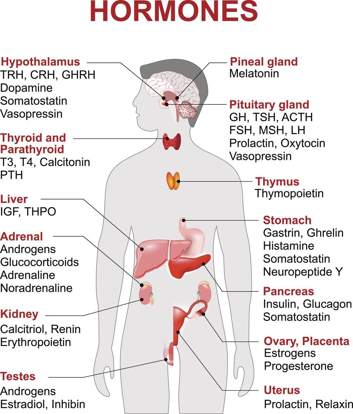 Endocrine Gland And Hormones