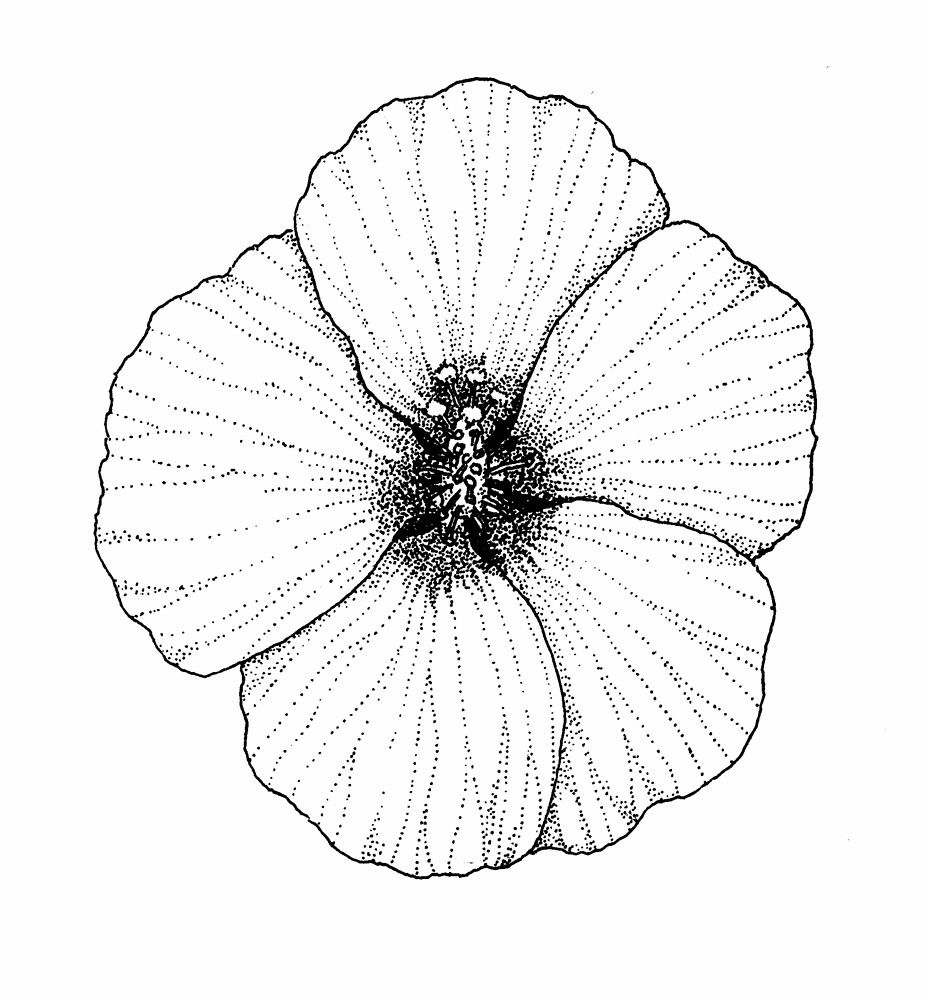 Dahlia Coloring Pages 221445 Hibiscus Coloring Pages | Kids crafts ...
