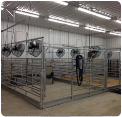 Calf Climate Cattle Coolers And Livestock Coolers