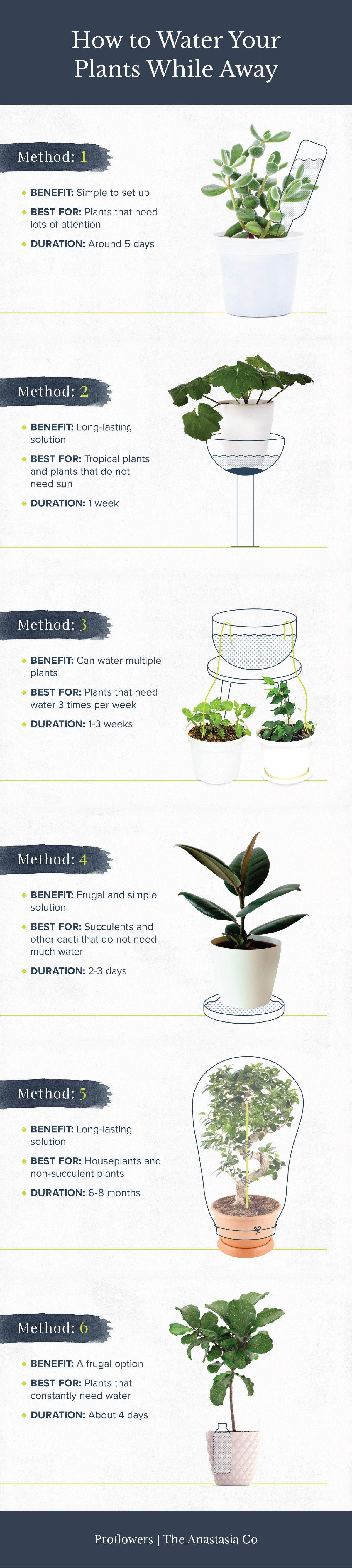 How to Water Plants While Away on Vacation   Water plants, Plants ...