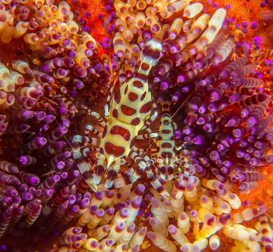 Psychedelic by Ortwin Khan - Photo 99271971 / 500px | ~Underwater ...