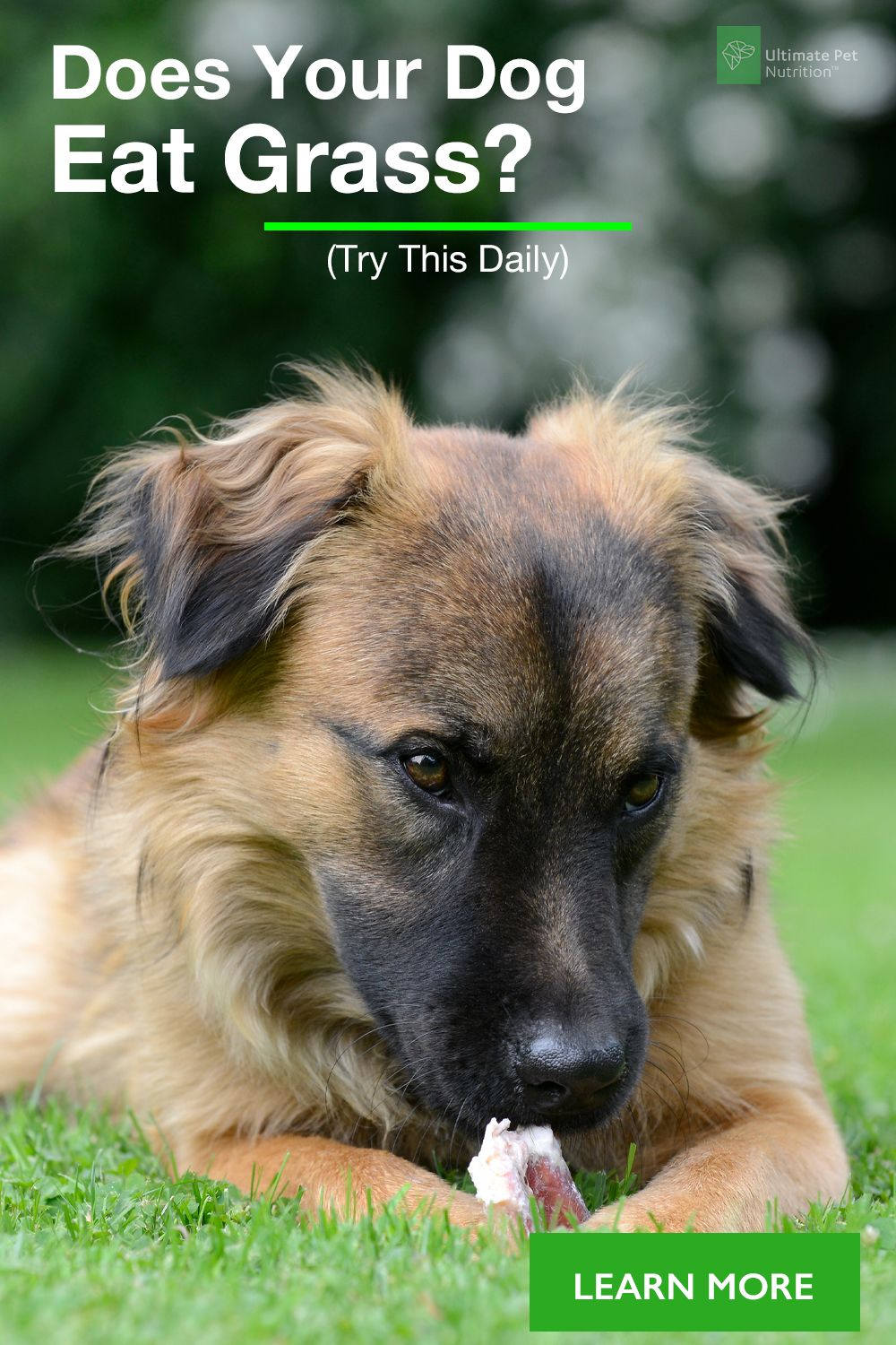 Pin By Neufel John On Dogs Dogs Family Dogs Breeds Family Dogs