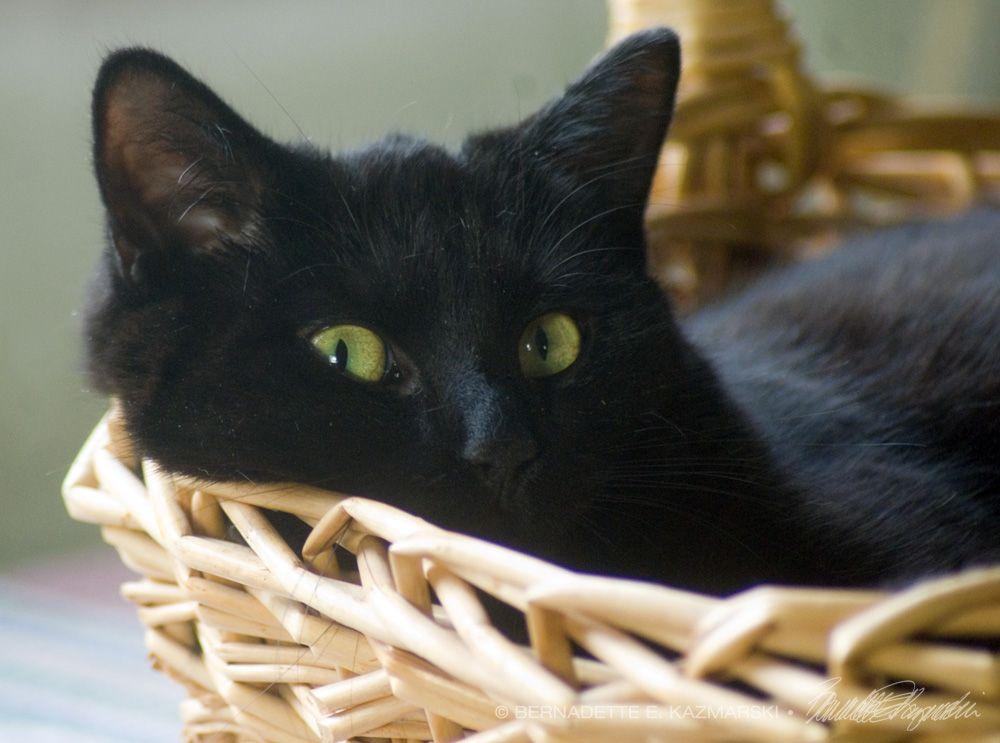 Bella Got A Basket