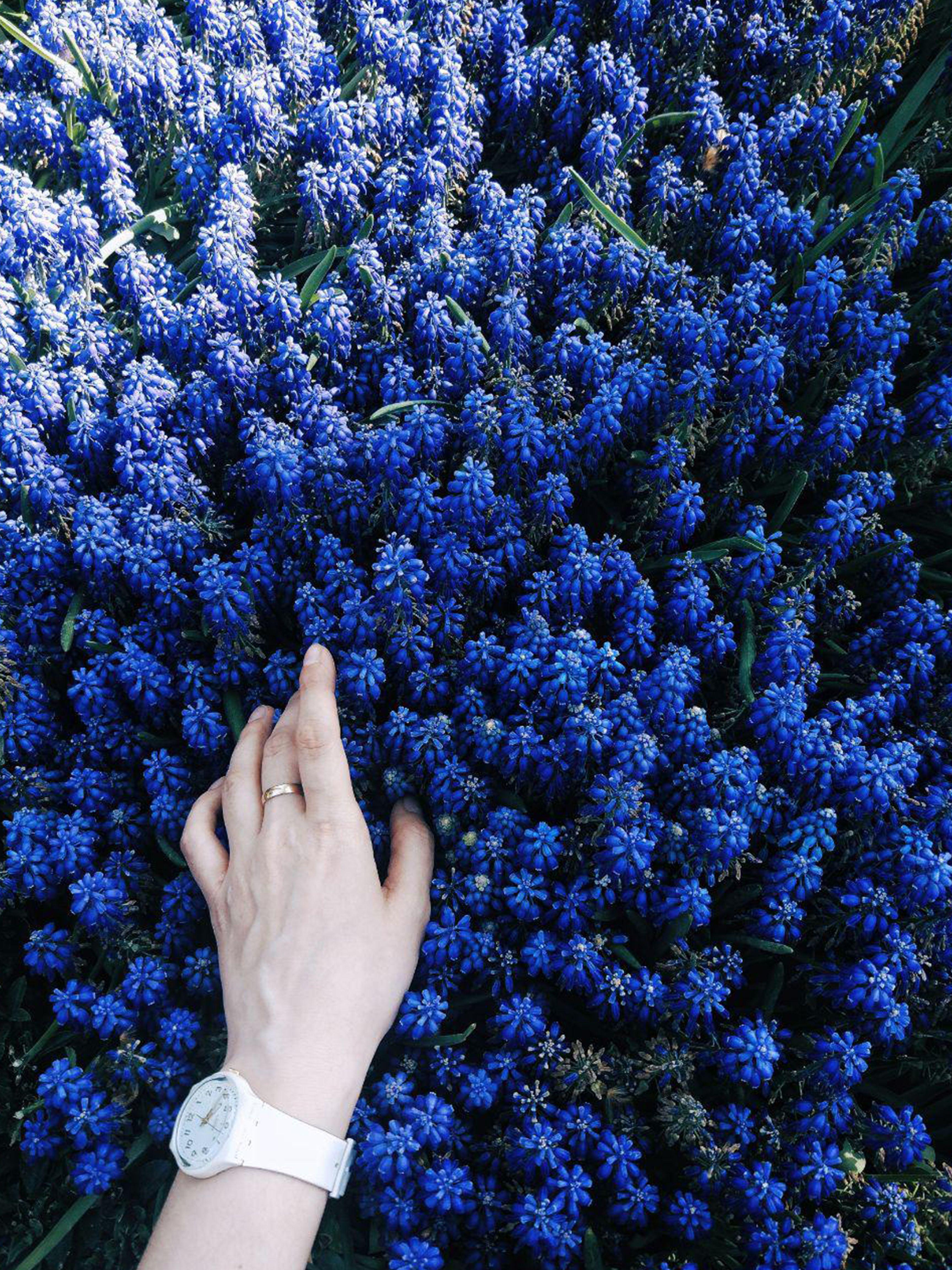 Про, прикольные картинки синего цвета