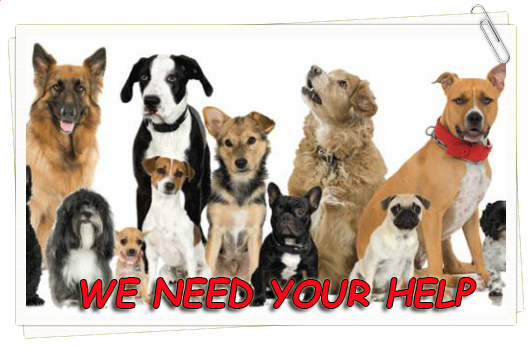 The Dogs Of San Bernardino City Shelter