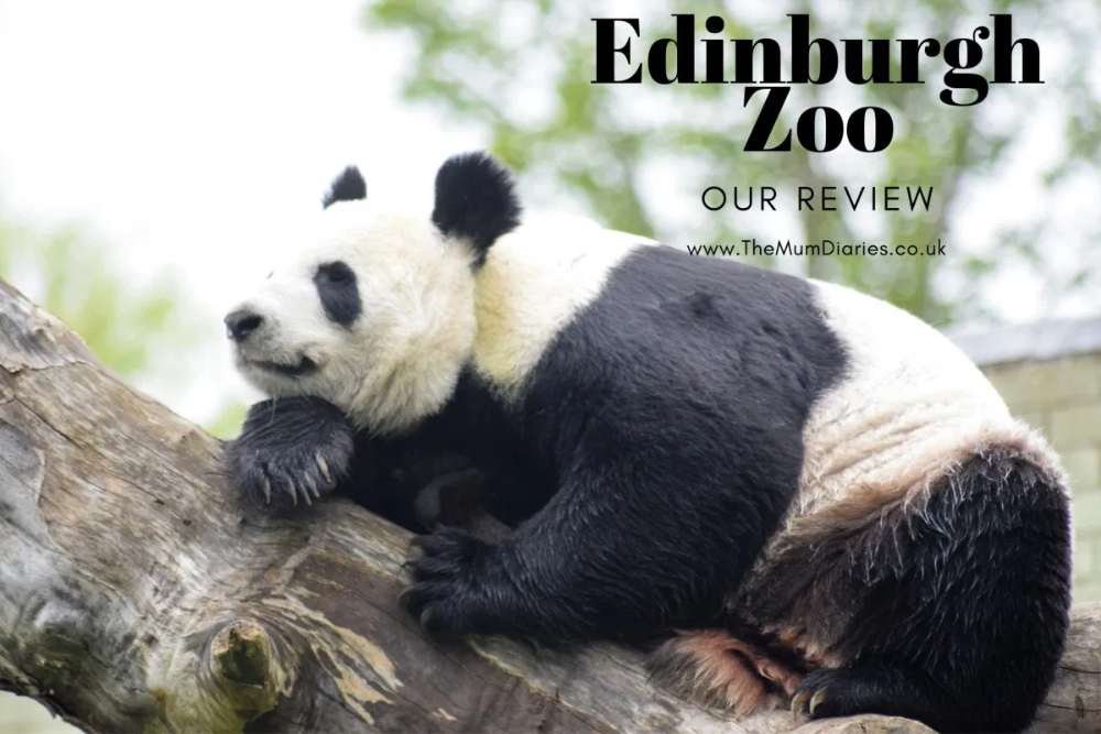 Ever Since We First Started Making Plans For Our Holiday In Scotland Edinburgh Zooedinburgh Zoo Was On Our To Do Li Edinburgh Zoo Edinburgh Days Out With Kids