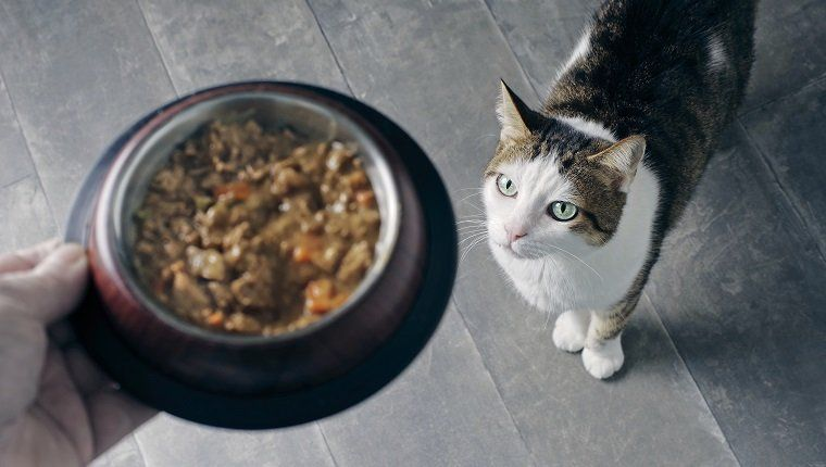 Food allergies in cats symptoms causes treatments in