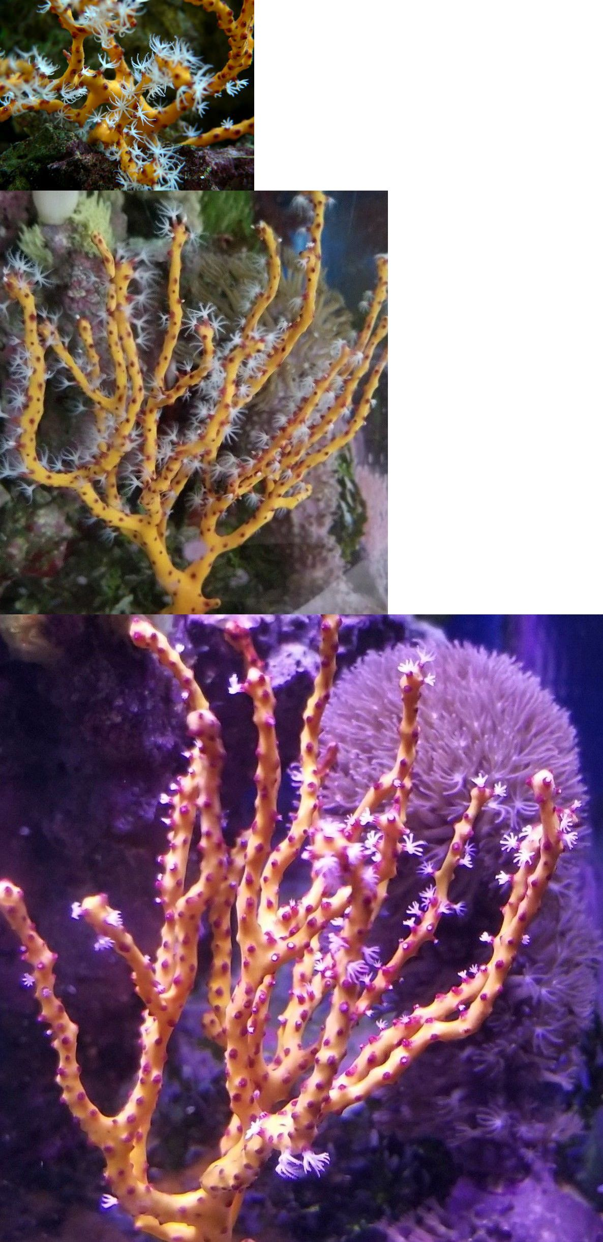 Pin On Coral And Live Rock 177797