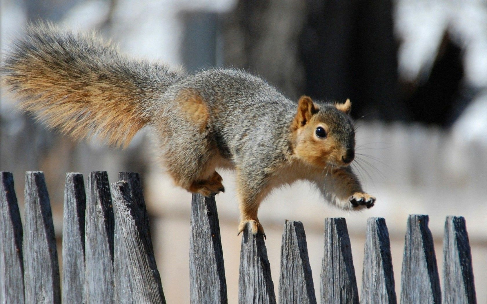Funny squirrel pictures animal animal photography - Funny squirrel backgrounds ...