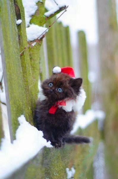 Santa Snow Kitty.