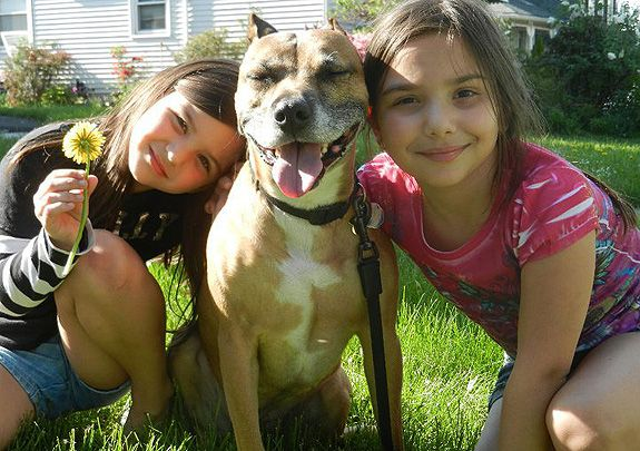 StubbyDog: news & views - how children can be safe around dogs