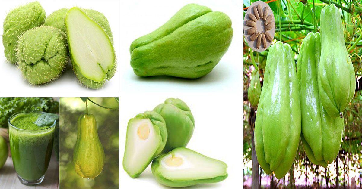 Tayota Y Sus Usos Medicinales Frutas Y Verduras Tayota Vegetal