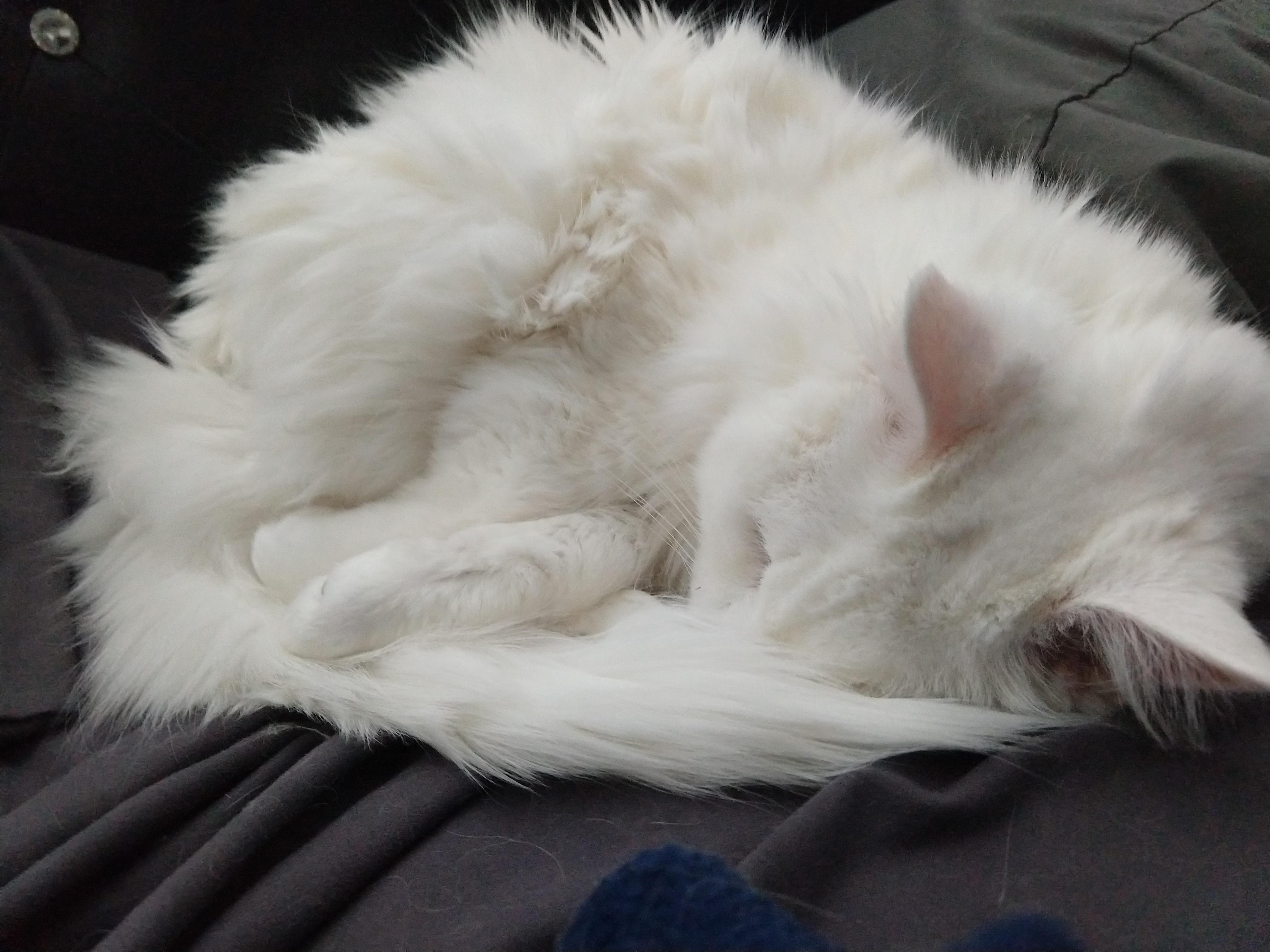 Best Part Of Owning A Senior Kitty Sleepy Snow Days Http Bit Ly 2cntg8n Kitty Sleepy Best