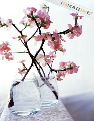 Cherry blossom branches in vases of water