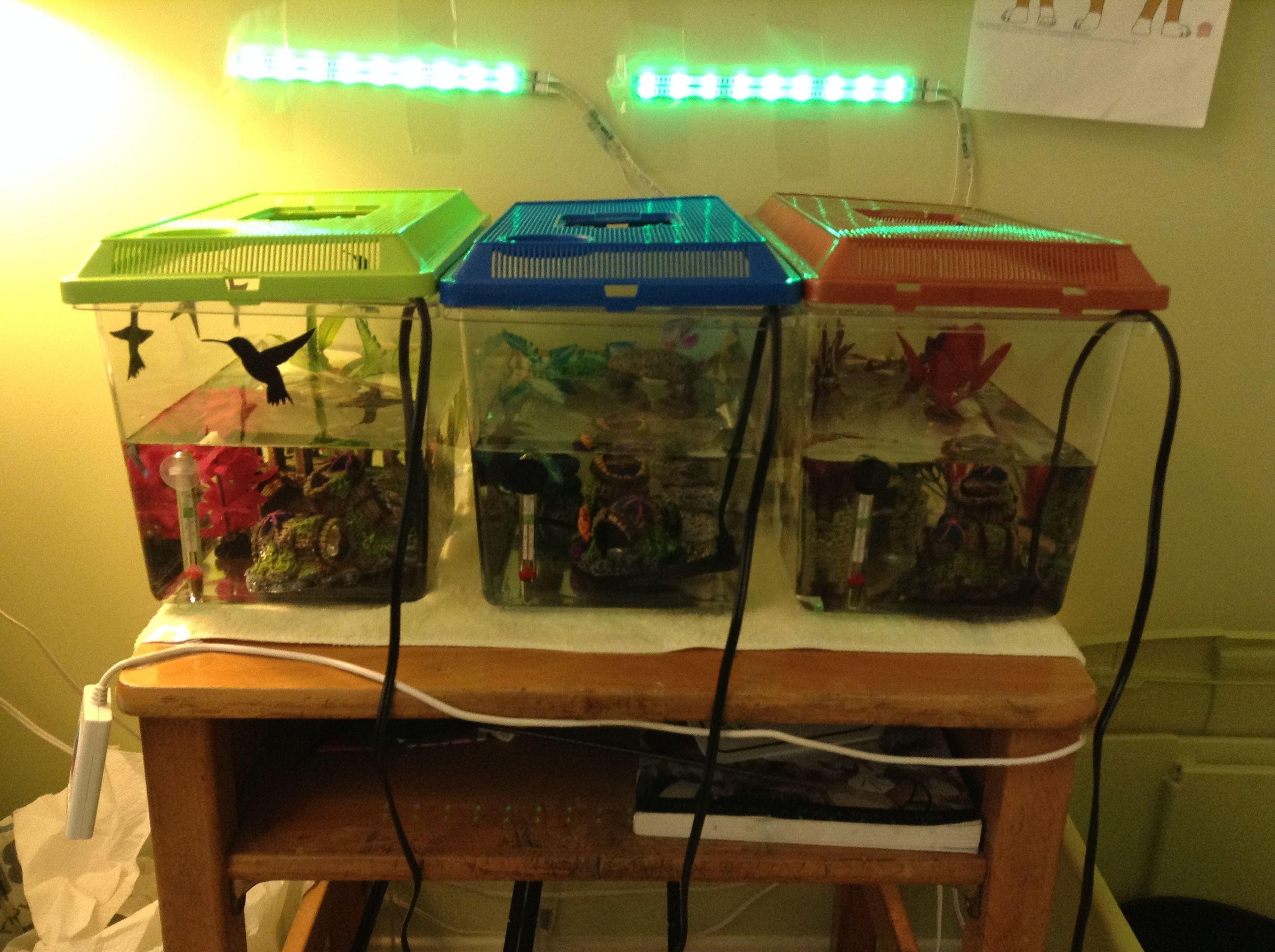 office desk aquarium. My Betta\u0027s Tanks In A Row On Small Desk. Office Desk Aquarium