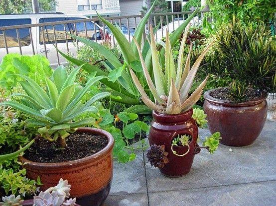 Plantas de exterior ideas para un jard n de ensue o for Plantas decorativas ornamentales