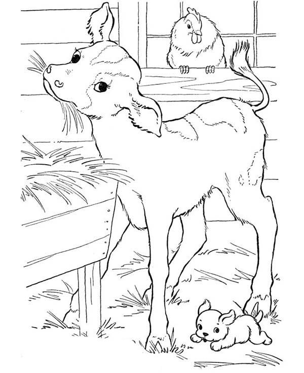 Farm Animal Coloring Pages Farm Animal Goat Eating Straw in