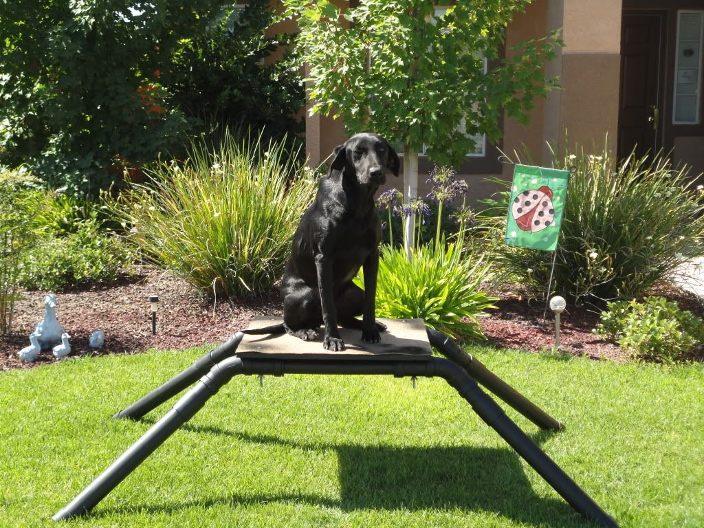 Diy Dog Stand Duck Hunting Dogs Hunting Dogs
