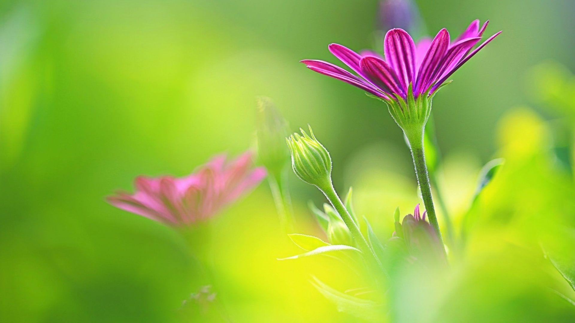 art by uemura shoen purple morning flowers hd wallpaper