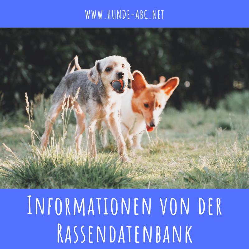 German Shepherd Strong And Loyal Mit Bildern Schaferhunde Hunde Deutsch Schaferhunde