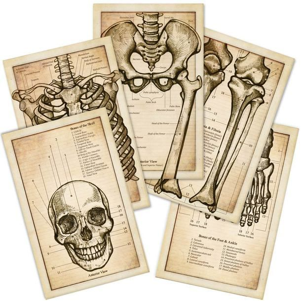 Anatomy Flash Card Set Need These For Chiropractic