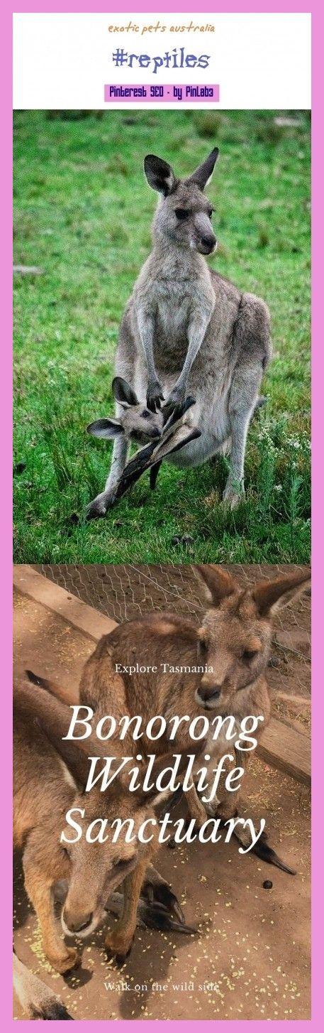Exotic pets australia exotic australia exotische