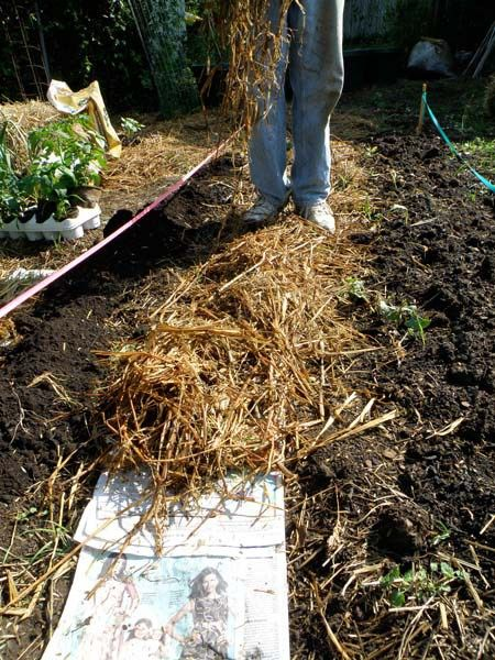 Mulching Vegetable Garden   Newspaper Is A Good Organic Mulch. Apply A  Layer Of Other Mulch Over It.