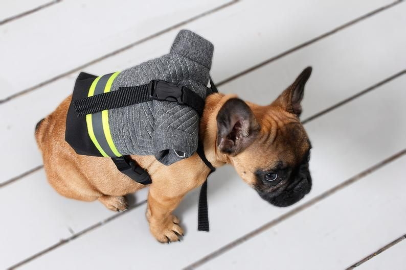 Not Just French Bulldog Backpack Harness Snackies Bag Costum Dog
