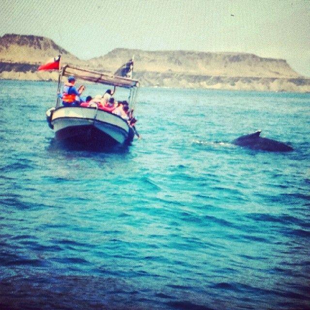 Ballenas a la vista