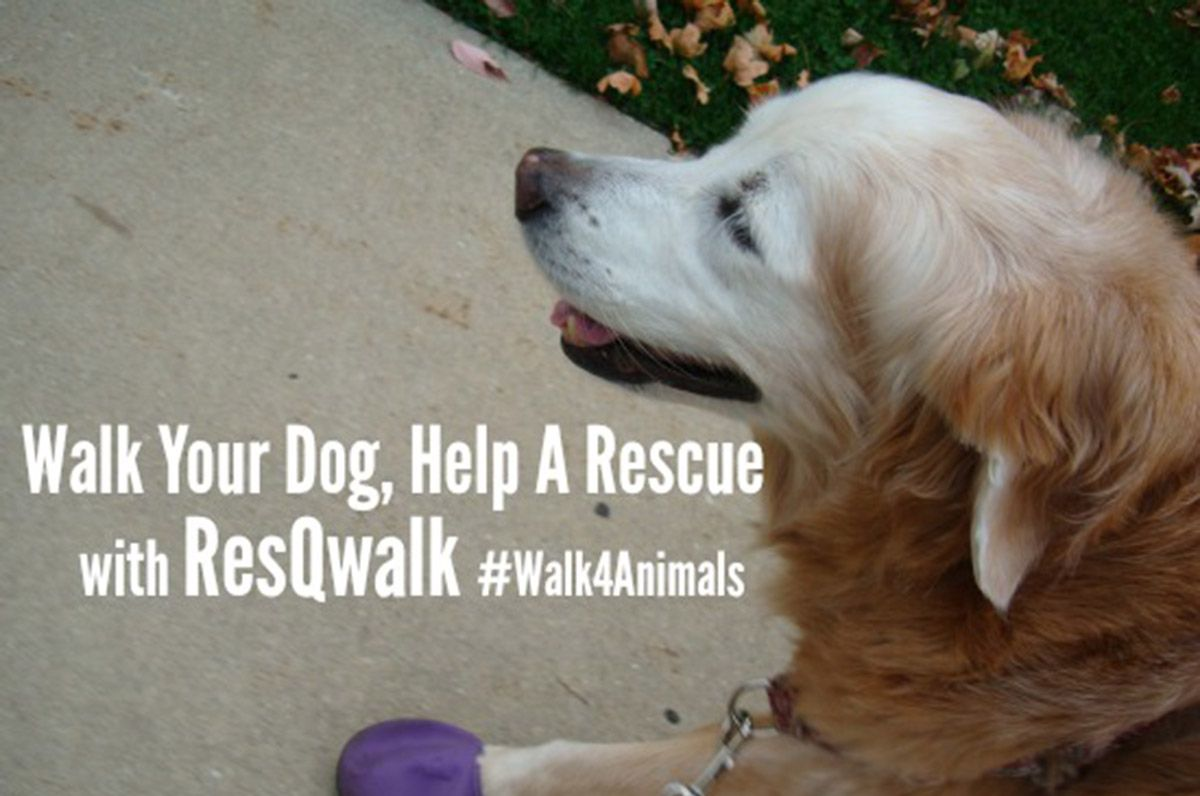 Help Needy Animals And Stay Fit With ResQwalk! Dogs, Dog