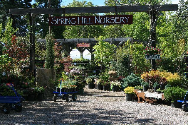 Spring Hill Nursery Garden Center Displays Centre Flower Plant