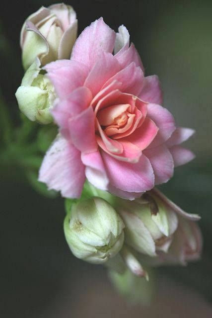beautiful pink flowers pin by gold dust woman seven wonders on high tea and