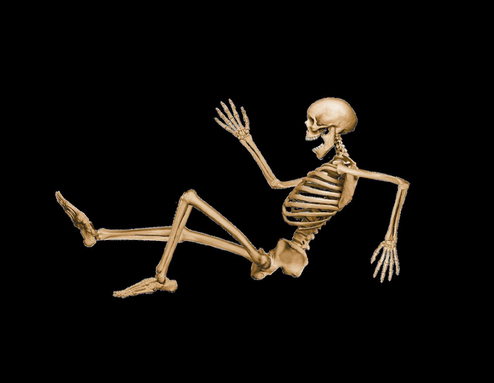 skeleton sitting down - google search | human anatomy (photo, Skeleton