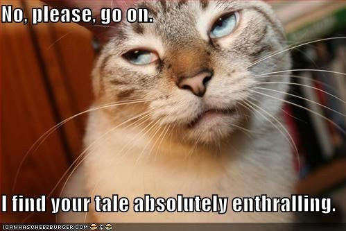 Funny Cat Ecards Funny Images And Jokes