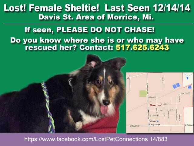 Lost Found Pet Connections Lansing Area Michigan Liked December 16 Losing A Dog Find Pets Sheltie