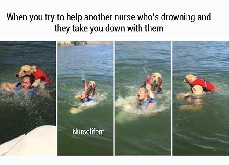 Drowning Nurse Memes Humor Nurse Humor Nursing Memes