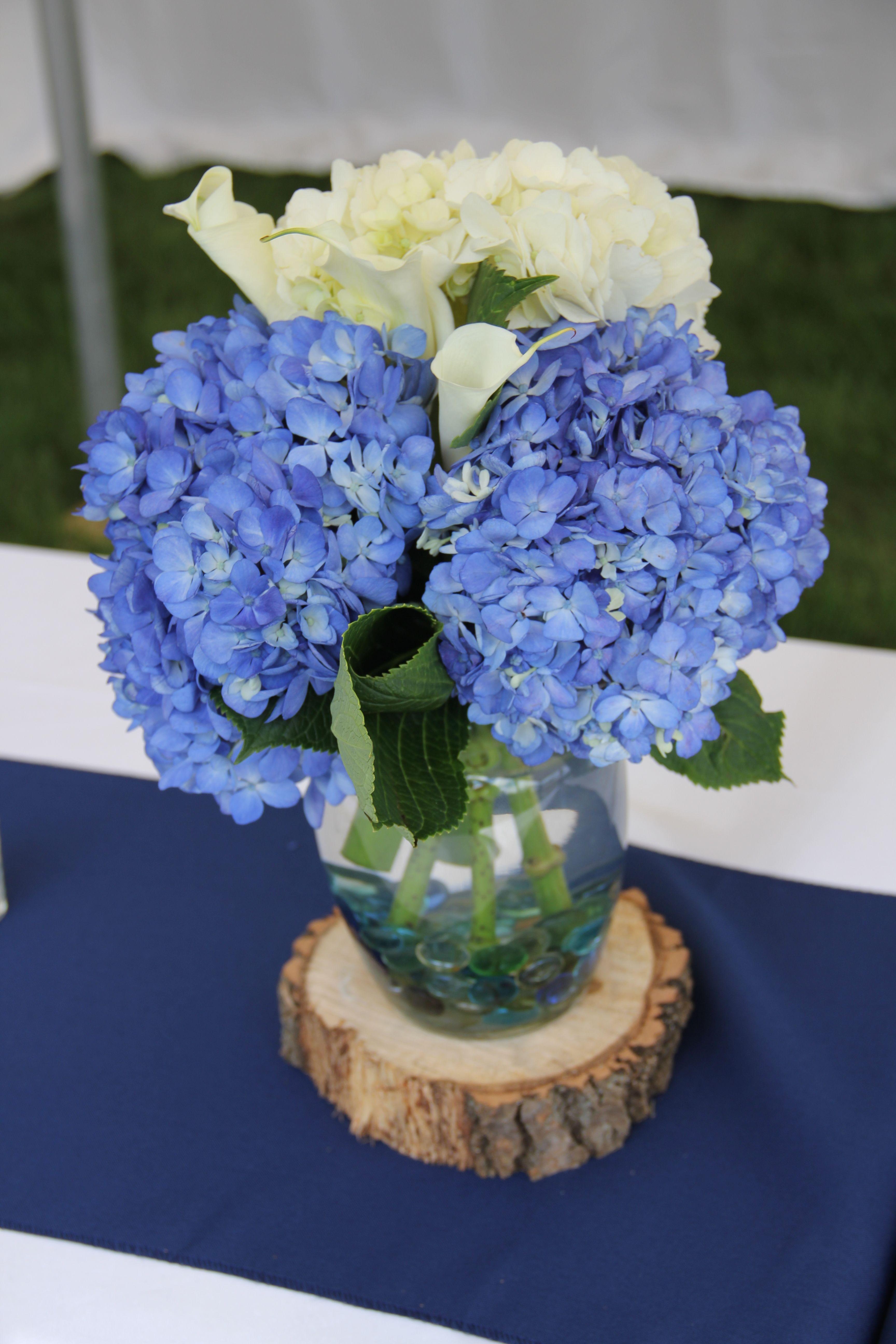 White and shocking blue hydrangeas from costco backyard