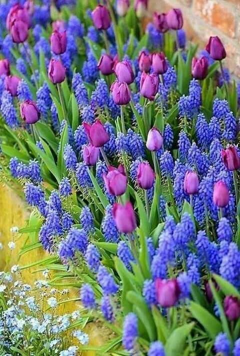 674c7aa1 Pin de Gabriela Dominguez en Flores | Pinterest | Jardinería, Huerto y  Plantas jardin
