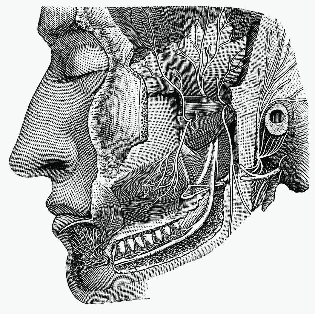 cranial nerves - Google leit | Brain and SLP | Pinterest | Cranial ...