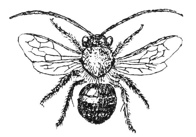 free vintage bee clip art vintage illustrations and clipart rh pinterest com etsy vintage bee clipart vintage honey bee clipart