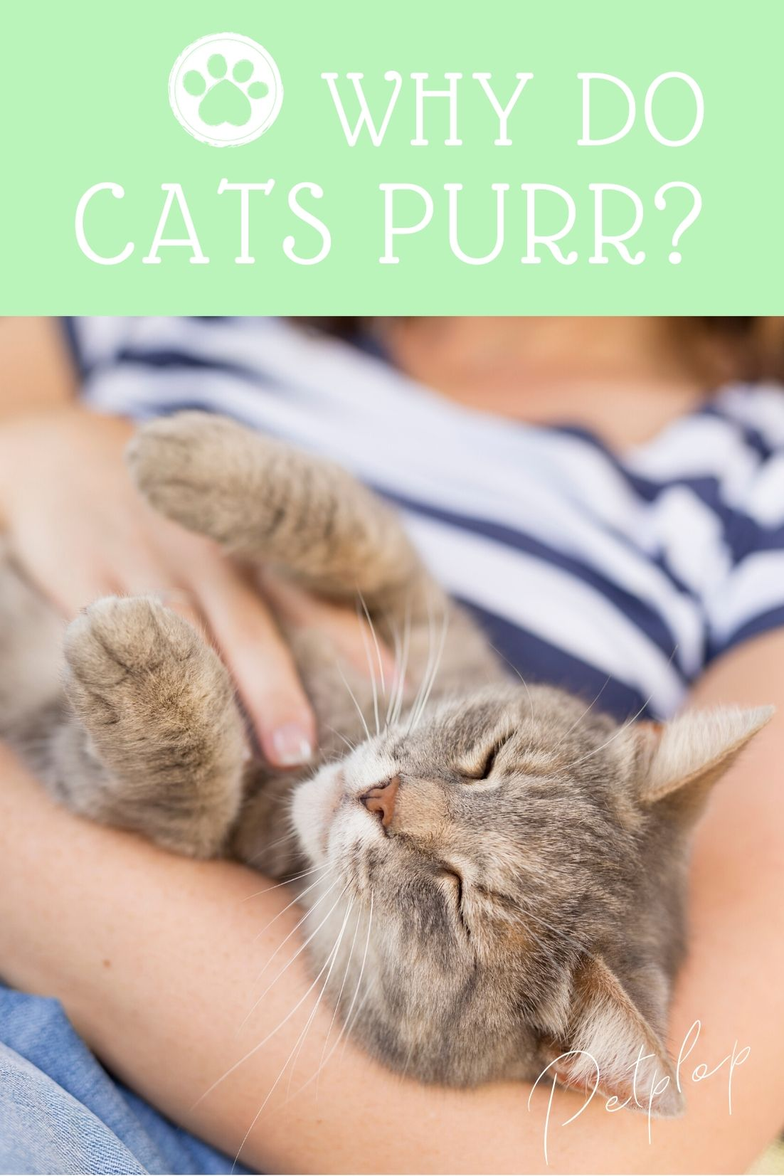 Pin On Articles And Tips For Pet Owners