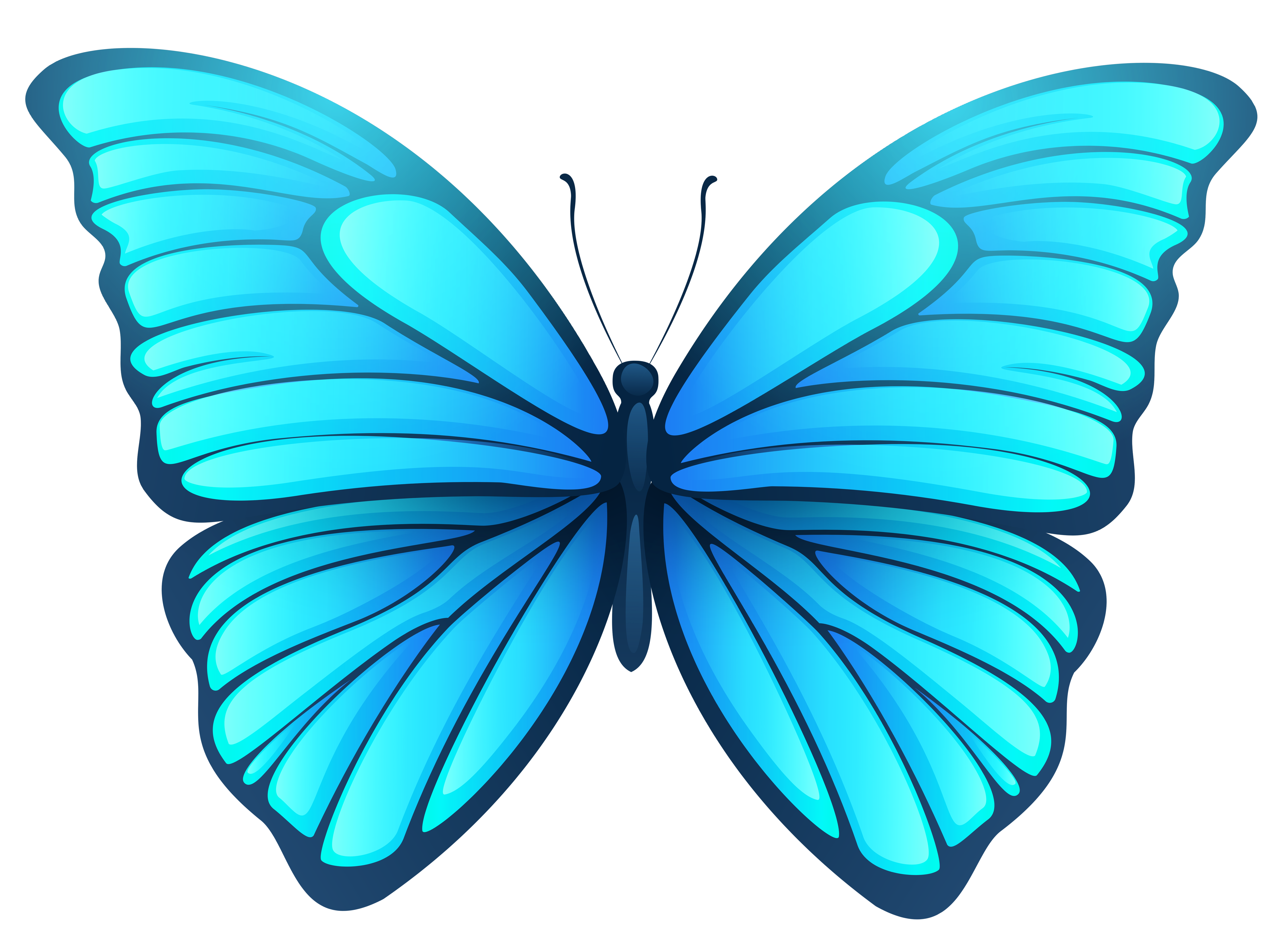 Днем, бабочки рисунок на прозрачном фоне