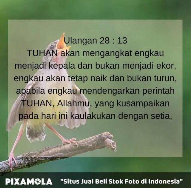 Gambar Kata Mutiara Selamat Pagi Islami 5 Ucapan Selamat Pagi Rohani Untuk Menemani Pagimu Kata Bijak Islam Selamat Ayat Alkitab Favorit Ayat Alkitab Bijak