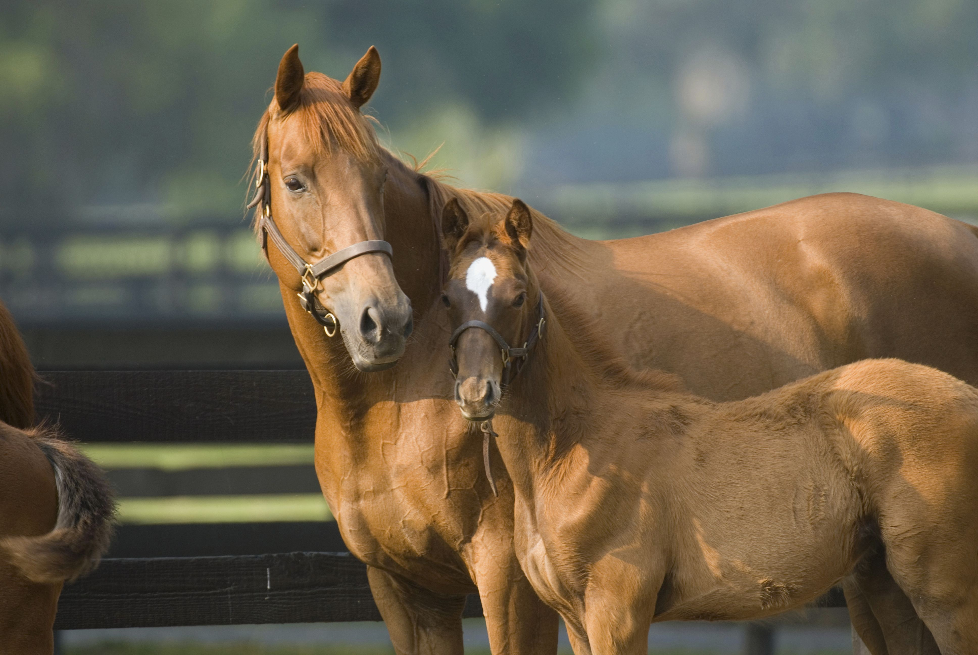 Best Practices For Weaning A Foal Horses Equines Equine Veterinary