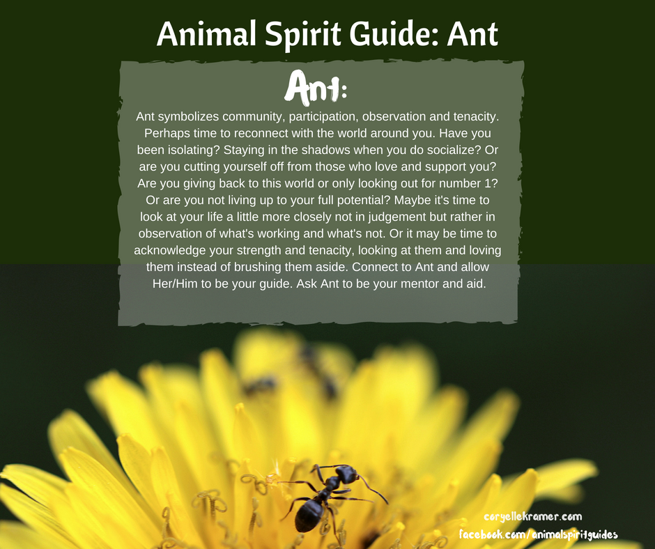 Animal Spirit Guide Ant Ant Symbolizes Community Participation